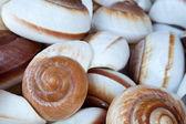 Many beige shells — Stock Photo