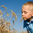 Boy smelling wheat ears — Stock Photo #8746853