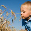 Stock Photo: Boy smelling wheat ears