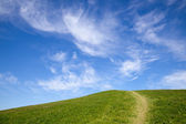 Green grass field against blue sky — Foto Stock