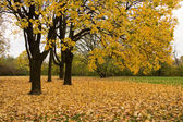 Yellow leaves in park — Stock Photo