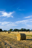 Golden hay bales on a field — Stock Photo