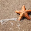 Starfish and wave on beach - Stock Photo