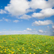 Green grass with yellow dandelion flowers against blue sky - Stock Photo