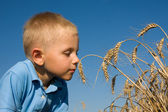 Boy smelling wheat ears — Stock Photo