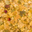 Yellow leaves background — Photo