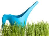 Gießkanne mit grünem gras auf weißem hintergrund — Stockfoto