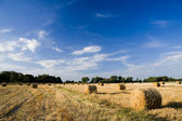 Golden hay bales on a field in a sunny day — Stock Photo