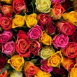 Colorful roses background — Stockfoto