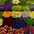 Colorful flowers background. — Photo