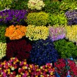 Stock Photo: Colorful flowers background.