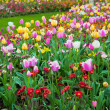 Colorful spring summer garden, flowers — Stock Photo