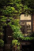 Retro vintage house entrance, ivy leaves — Stock Photo