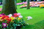 Colorful flowers in spring park, garden — Stock Photo