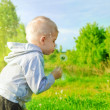 Cute child blowing dandelion — Stock Photo