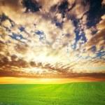 Sunset over green grass field — Stock Photo #7987160