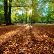 Colorful fall autumn park - Stock Photo
