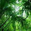Tropical green forest — Stock Photo