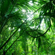 Tropical green forest - Stock Photo