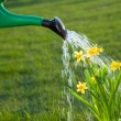 Watering the flowers - Stock Photo