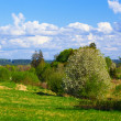 Rural spring landscape — Stock Photo