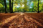Colorful fall autumn park — Stock Photo