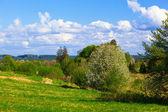 Rural spring landscape — Stock Photo