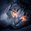Cat with scary red glowing eyes — Stock Photo #8958091