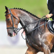 Photo: Show Jumping closeup scene