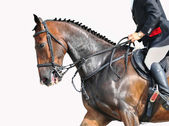 Rider and horse - closeup — Stock Photo