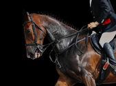 Jezdec a kůň - detail — Stock fotografie