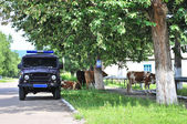 Russian rural police car and cow — Stock Photo