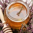 Herbal honey — Stock Photo