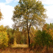 Colorful autumn forest — Stock Photo #10626602