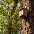 Birdhouse on a tree trunk — Stock Photo