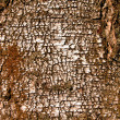 Royalty-Free Stock Photo: Texture of birch bark