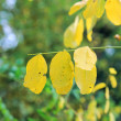 Yellow leaves on a small tree - Stock Photo