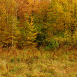 Colorful autumn forest — Stock Photo #10629379