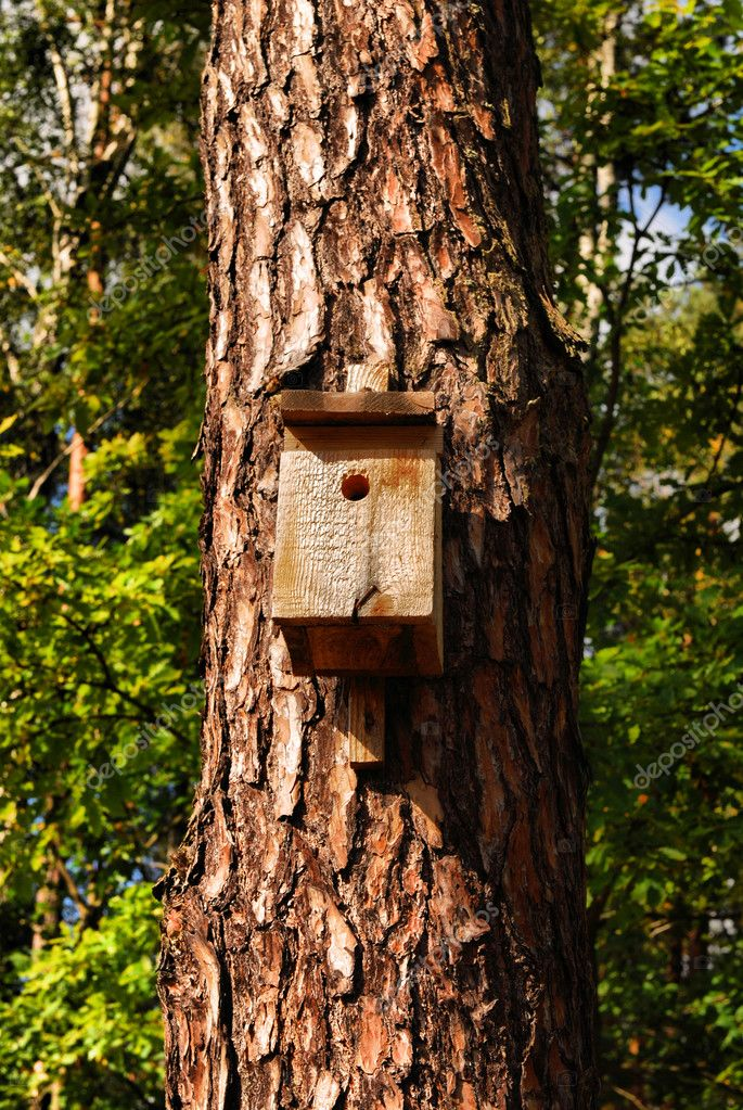 Bird house on a tree in a forest. — Stock Photo #10627883