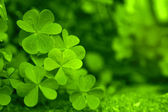 Beautiful green spring leaves — Stock Photo