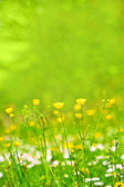 Abstract background of spring grass and flowers — Stock Photo