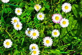 Top view of green grass and flowers background — Stock Photo