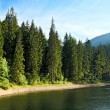 Mysterious Sinevir lake among fir trees. Carpathians. Ukraine — Stock Photo