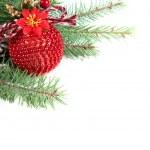 Филиал елки с мячом и шишка — Стоковое фото