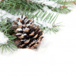 Branch of Christmas tree with pine cone — Stock Photo