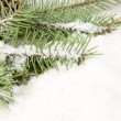 Branch of Christmas tree with snow — Stock Photo #8135493