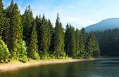 Mysterious Sinevir lake among fir trees. Carpathians. Ukraine — Stock Photo