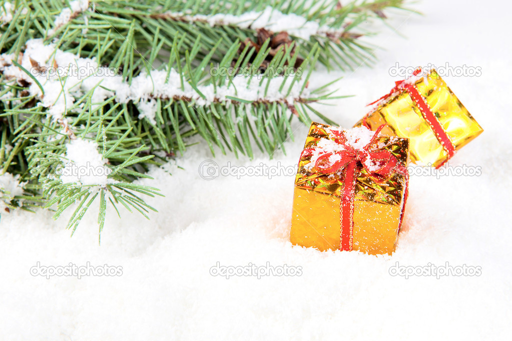 Branch of Christmas tree with box gift golden  Stock Photo #8135498
