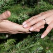 Close up of female and man's hands against fur-tree branches — Stock Photo