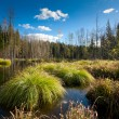 Stock Photo: Marshland